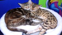 Cat Clips #45 Valentines Secret