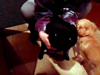 Hilarious Black Pug!!