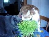 Herbe à chat et Misty et Tigrou