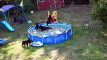 Une famille d'ours s'éclate dans leur piscine