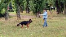 Amber owczarek niemiecki - frisbee i piłka * german shepherd - frisbee & ball