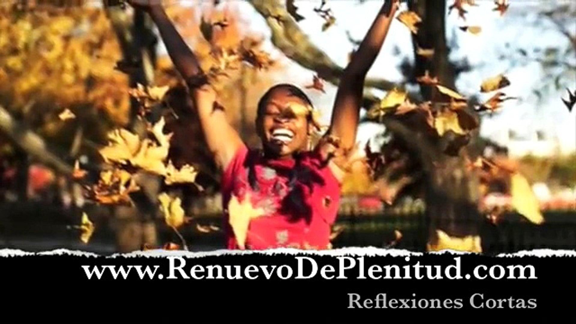 Reflexiones video - Las Moscas y la Miel - Videos Cristianos