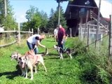 Eden Dog Sledding  -  Dog-Sledding-On-Wheels - Warm Weather Fun!!!!