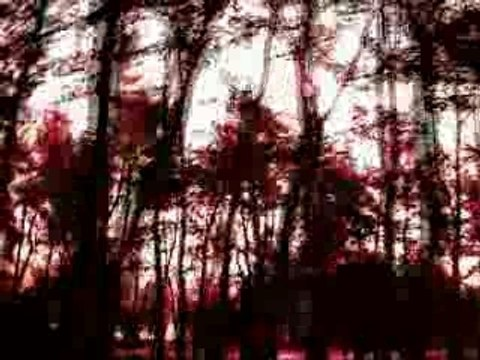 Dead can dance  the tree