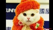 Les meilleures photos de chats habillés
