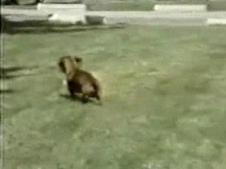 Rusty le chien narco