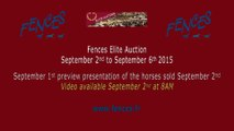 Fences Elite Auction 2015, Sept 1st Preview night, Wednesday Horses