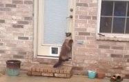 On a trouvé le chat le plus stupide du monde !