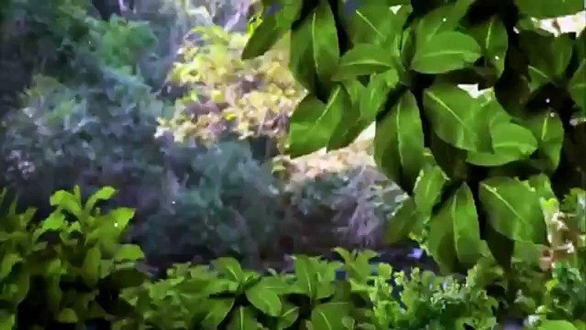 Coração Indomável Capítulo 70 29/05/15 (Dublado Completo HDTV) SEM CORTES Part 1