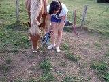 Tuto n°1 : Comment mettre un licol à un poney ou à un cheval au champ ?