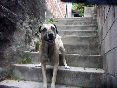 Amores perros amores verdaderos