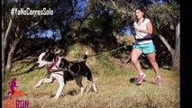 Amores Perros y Otros Amores -  Can Run