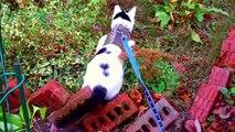 Cat & Butterflies [cute Summer Cat music video] Amazing Kal the Rescue Cat Adventure