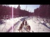 traineau chiens, sled dog 2011 - 2012 chenil de la montagne. wmv