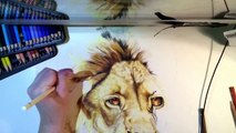 Speed Drawing - Cecil The Lion - Colored Pencils Pan Pastels Time Lapse Art