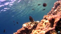 The Blue Sea adventures: Sun Shine under the sea