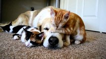 funny videos for kids, dogs cat pet animals sleeping fun,