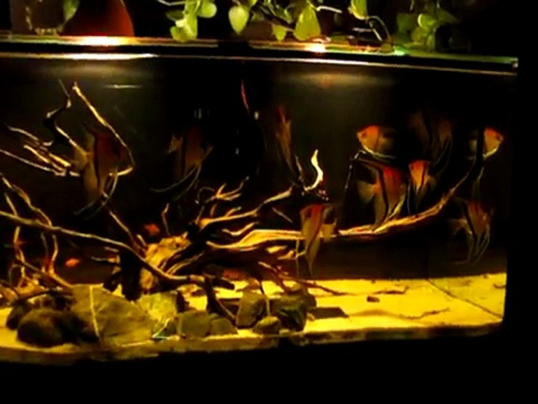 My Amazon Black Water Biotope Lago Manacapuru Video Dailymotion