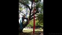 Pencil Drop Danza Aerea Al Parque Arte Viva