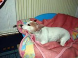 Pictures of Mavis Lucero (our baby dog)...Who lived In Dunzweiler/Rheinland-Pfalz/Germany