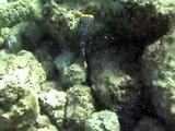 Fish Variety, Poipu Beach Park Reef, Kauai, Hawaii