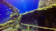 Scuba Diving - Canal Rocks and HMAS Swan - 15-16/02/14