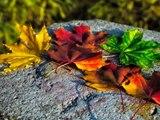 Calatorii de toamna - Autumn Travels