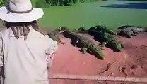 Un crocodile bouffe la patte de son pote !