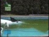 drole-chien piscine