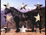 merens horses