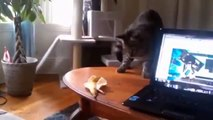 funny animals,funny cats compilation 2014,funny cat videos,funny top cats crazy,funny videos cats 2