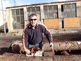 custom log peeling machine, log peeler, log debarker, debarker, peeling, debarking