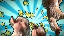 La Scimmietta Gratta Gratta Canzoni Per Bambini E Bimbi