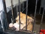You could save me - the charity single for death row dogs