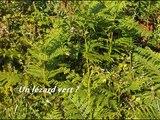 Lézards verts et vipère péliade dans le Finistère sud