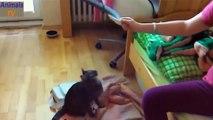 Animal Videos ★ Crazy Cats Jump Fails ★ Cute Cat Videos Compilation ★ AnimalsTV
