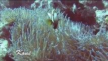 Vidéo-compil de plongées avec le club Kauméa-plongée CSANC