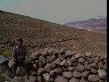 Llica , Bolivie : Entre quinoa et lamas