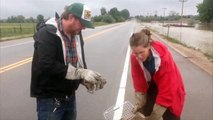 Prairie Dogs Rescued from Colorado Flooding