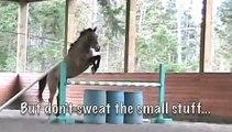 Golden Akhal-Teke Free Jumping ~ Purebred Buckskin Sport Horse