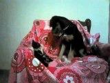Un bébé chien trop contrent de rencontrer un bébé chat... Adorable