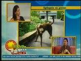Epilepsia en los perros, Servicios Veterinarios  Viva la Mañana  231012