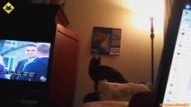 Funny Cats - Funny Cat Videos - Funny Animals - Fail Compilation - Cats Fails 2015