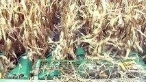 Farm News Cab Cam: HWR Farms & Corn Harvest