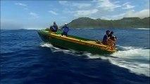 Baleines à bosse, île de Rurutu, Humpback whales