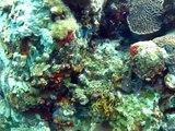 "Incredibly Colorful Dive Site! Virgin Gorda Scuba Coral Head ""Chimney"" w/ Dive BVI Caribbean"
