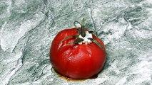 101 - Tomato Rotting - Time Lapse Photography