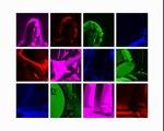 Head on - Colors - Pixies