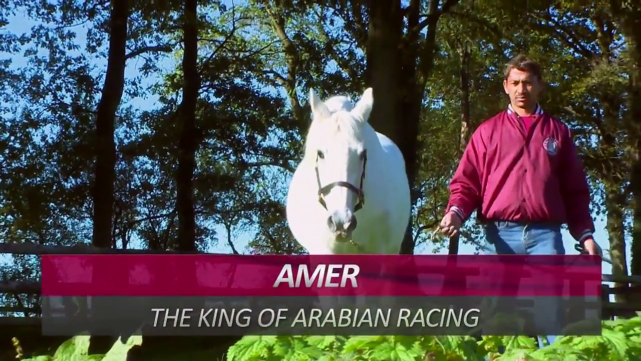Arabian Horses Compilation of 12 Different Pure Arabian Breeds | horses compilation