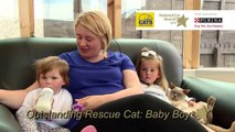 National Cat Awards - Outstanding Rescue Cat Award finalist: Baby Boy